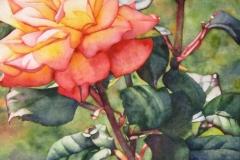 2015-Remembering-Roses-Bright