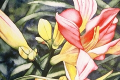 "Lorna's Daylilies #3. Watercolour on paper, 15"" x 11"". Private Collection"