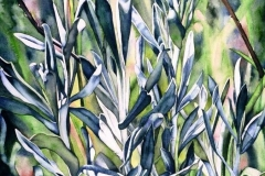 """Sage Blues and Greens. Watercolour on paper, 30"""" x 22"""". Private Collection"""