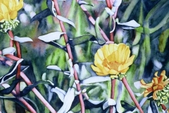 "Bright Scent of Gumweed. Watercolour on paper, 30"" x 22"". Private Collection"