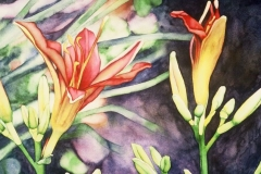 "Lorna's Daylilies #1. Watercolour on paper, 11"" x 15"". Private Collection"