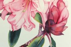 "Portraits: Rhodendron # 1, watercolour on paper, 14"" x 10"""