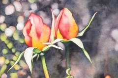 """Remembering the Roses - Duet. Watercolour on paper,  22"""" x 15"""""""