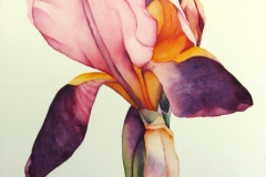 "Portraits: Iris # 2, watercolour on paper, 14"" x 10"""